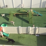 Dogs playing in the outdoor play area