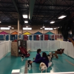 dogs playing inside Paw Spa